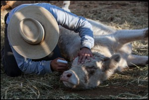 Pablo Rojas - cowboy - El Mogor - Baja California - Mexique ludovic pollet copyright Photojournalisme